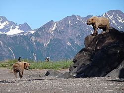 Great Alaska Bear Camp