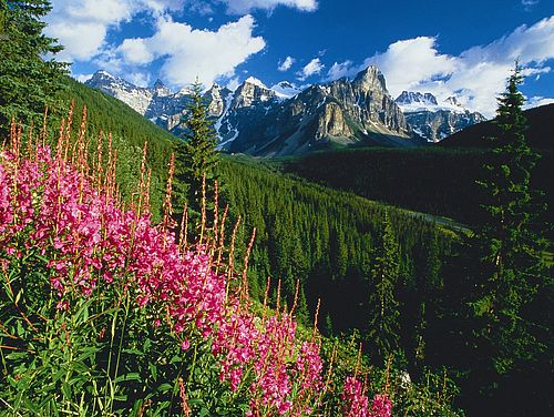 Blumen im Banff-Nationalpark
