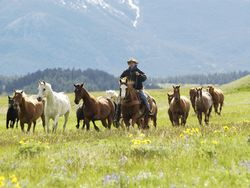 Ranches in Montana
